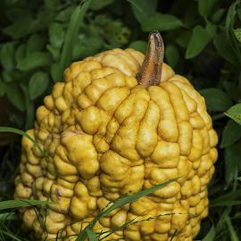 heirloom pumpkin by Cornel Robinson - Nature Up Close Gardens & Produce ( park, green, white, head, spring, garden, flower )