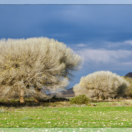 Karoo Landscape by Charmaine Ras-Burger - Landscapes Prairies, Meadows & Fields