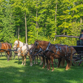 old time... by Jean-Marc Landry - Transportation Other ( horses, transportation )