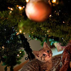Bunnie Christmas by Dustin Wawryk - Public Holidays Christmas