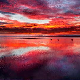 At The Last Moment by Julianne Bradford - Landscapes Beaches ( sunset, lowtide, ocean, redsunset, seascape, beach, redseascape )