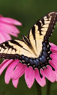 Butterfly Jigsaw Puzzles - screenshot