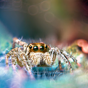 by Goestie Rama - Animals Insects & Spiders