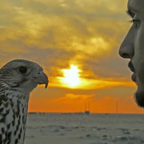 falcon and friend by Yahia  husain - Animals Birds ( bird, eagle, falcon, falcons, eagles )