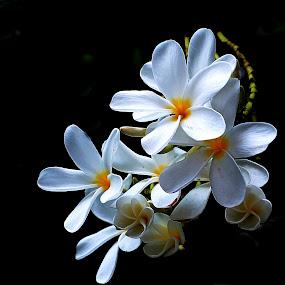 Champa in bloom by Pradeep Kumar - Flowers Flowers in the Wild