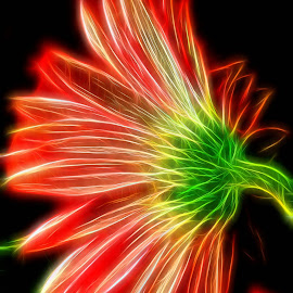 Gerbera Brite by Millieanne T - Digital Art Abstract