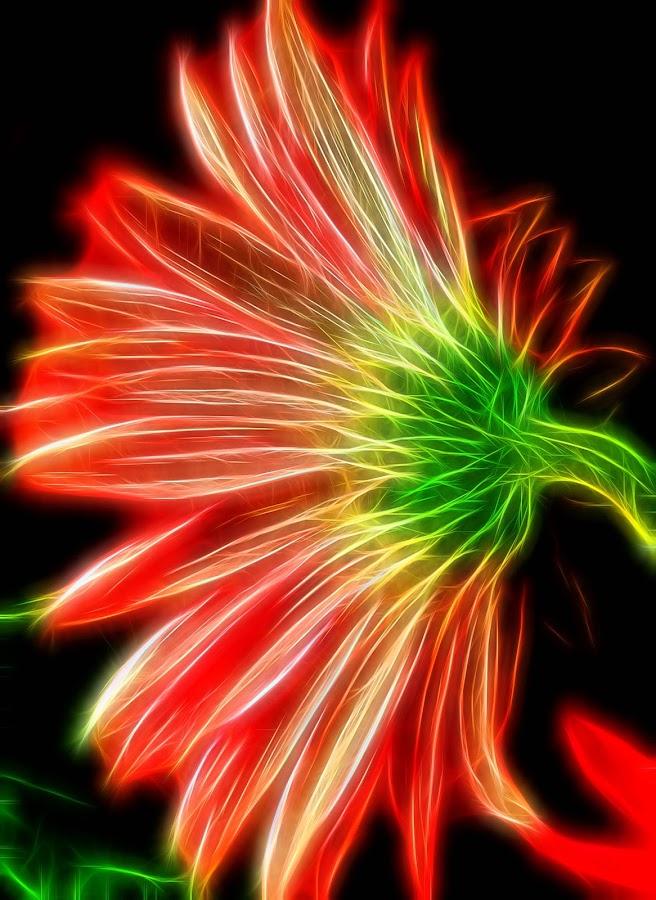 Gerbera Brite by Millieanne T - Digital Art Abstract