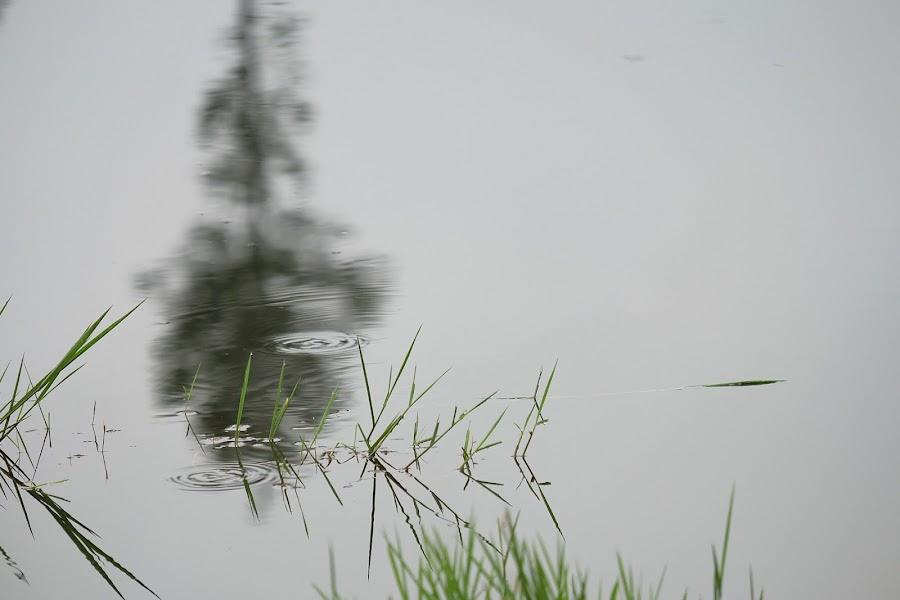 Reflection by Kitkat Katrina - Nature Up Close Water ( water, reflection, park, tree, grass, drop, green, bush, garden, rain drop )