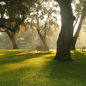 morning meeting place by John Wollwerth - Landscapes Prairies, Meadows & Fields ( nobody, lawn, park, bench, grass, green, lush, beautiful, beauty, landscape, morning, south carolina, meeting, trees, garden, evening, croquet )