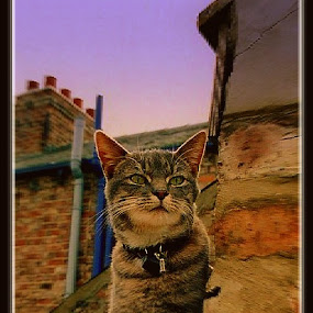 Streetwise Cat, 1997 by Paul White - Animals - Cats Portraits ( streetwise, tabby )