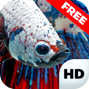 Download betta fish wallpapers hd apk to pc download for Betta fish game