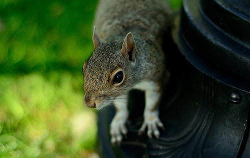 An Innocent Squirrel by Anupam Pal - Animals Other ( an innocent squirrel )