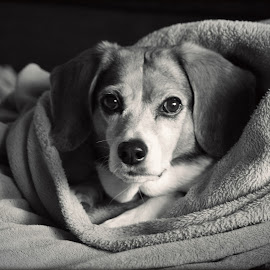 by Marta Rac-Rad - Animals - Dogs Portraits