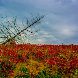 Prairie Fall by Bill Phillips - Landscapes Prairies, Meadows & Fields ( grassland, skyline, nature, season, color, leaves, landscape )