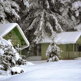 Зимна приказка by Dobrinka Ivanova - Landscapes Weather ( сняг, зима, приказка )