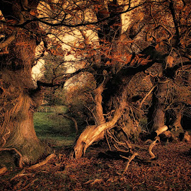 old trees by Tomasz Marciniak - Landscapes Forests ( uk, park, trees )