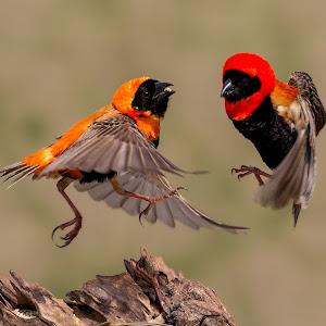 COLOR BIRDS-190.jpg