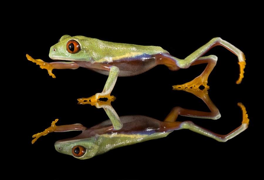 Run froggy run by Angi Wallace - Animals Amphibians