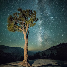 A lone Jeffrey Pine by Zachary Hayes - Landscapes Starscapes ( jeffrey, new moon, landscape, universe, milky way, sky, nature, tree, yosemite, stars, cailfornia, night, granite )