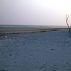 The Lonely Beach in Eastern India by Debopam Banerjee - Landscapes Beaches ( reflection, botany, lowcountry, lone, ocean, beach, landscape, bengal, heritage, coast, photography, island, tree, india, surf, dead, light, water, sand, saline, sea, mark, scenic, coastal, reflecting, bakkhali, dawn, bay, bay of bengal, outdoors, south, puddle, early, salt )
