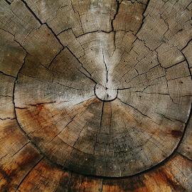 by Debbie Slocum Lockwood - Nature Up Close Trees & Bushes