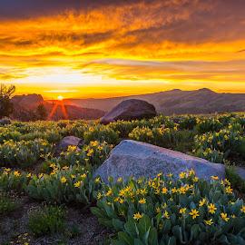 Garden of Eden by Mike Lindberg - Landscapes Mountains & Hills ( wildflowers, sierra nevada, calfornia, carson pass, sunset, eastern sierra, round top, sunstar, sierra, flowers, winnemucca lake )