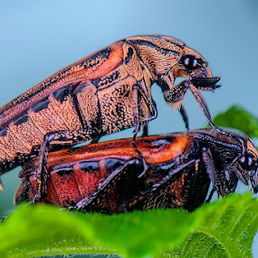 Look at us by Jeffry Sabara - Animals Insects & Spiders
