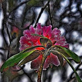 Catch  the    winter    glow by Gordon Simpson - Flowers Flower Buds