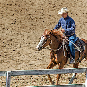 Giddy Up Cowboy by Susan Foss - Animals Horses ( cowboy, riding, horse, fair )