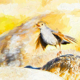 Bird on a rock by Pravine Chester - Digital Art Animals ( bird, animals, digital art, digital painting, manipulation )