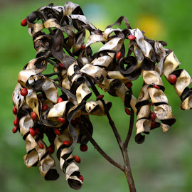 Seeds  by Asif Bora - Nature Up Close Other plants