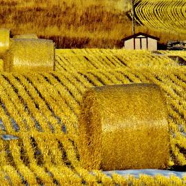 The scene of the field by Pamela Zeng - Landscapes Prairies, Meadows & Fields