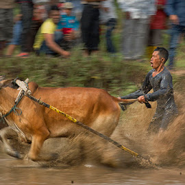A unique racing cow by Muhasrul Zubir - Sports & Fitness Other Sports