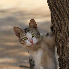 by Mark Burnett - Animals - Cats Portraits