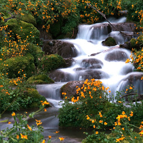 Wild Flowers by the Stream by Larry Chipman - Landscapes Waterscapes (  )