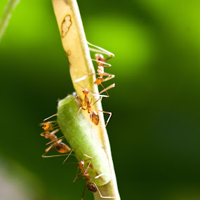 Irritate by Anoop Chandriyan - Animals Insects & Spiders