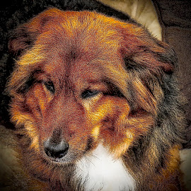 Layla by Jim Antonicello - Animals - Dogs Portraits ( dog )