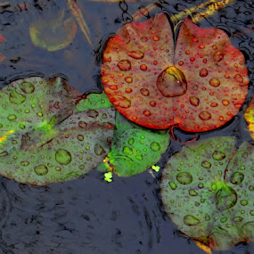 raindrops on the leaves of water lilies ... by Dubravka Bednaršek - Nature Up Close Other plants (  )