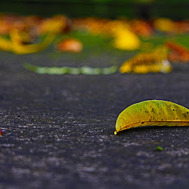 The Color Of Autumn by Subhajit Nath - Nature Up Close Leaves & Grasses ( roof, dawn, colorful, autumn, morning, leaves )
