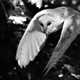 by Anthony Hutchinson - Black & White Animals (  )