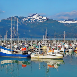 Haines Harbor Alaska by Marc Baisden - Transportation Boats ( travel adventure, charters, haines alaska, boats, alaska, travel )