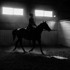 Barn Silhouette 1 by Monte Arnold - Animals Horses ( trot, rider, black and white, shadow, beautiful, horse )