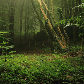 Forest Fawr, Tongwnlais, Cardiff Wales by Jason Davies - Uncategorized All Uncategorized ( eerie, tongwnlais, tree, wood, nature, green, dark, forest, landscape, walk )