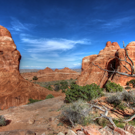 Arches National Park by Dipali S - Landscapes Deserts ( moab, orange, unique, desert, park, america, national, states, sandstone, rock, scenic, preserve, red, arches national park, nature, utah, formations, outdoor, arches, southwest, service, monument, natural, geological )