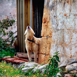 by Domenico Liuzzi - Animals Other