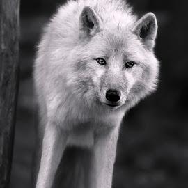 by Renos Hadjikyriacou - Black & White Animals