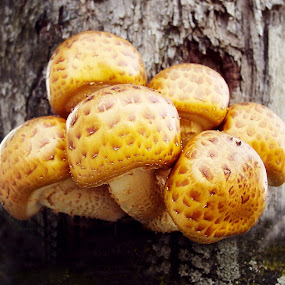 Tree Jewelry by Elaine Tweedy - Nature Up Close Mushrooms & Fungi