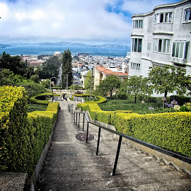 Stairway to the Bay by Sandy Scott - City,  Street & Park  Neighborhoods ( water, stairs, park, stairway, rails, bay, buildings, streets, architecture, san francisco, city )
