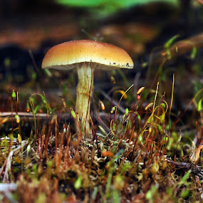 Umbrella by Cristobal Garciaferro Rubio - Nature Up Close Mushrooms & Fungi ( fungi, mushtoom, grass, bokeh, hongo )