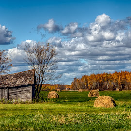 Old Farmstead by Dave Lipchen - Landscapes Prairies, Meadows & Fields ( derelict shed, autumn, fall, prairie, hay bails,  )